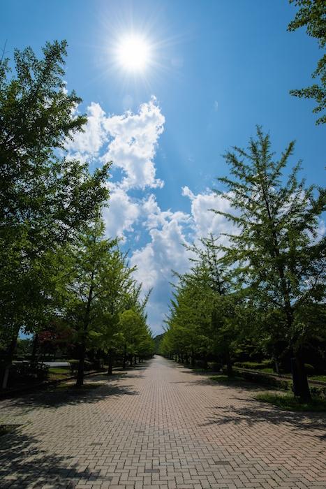 PEZ82_manatuhizashitonamiki-thumb-autox1600-15731