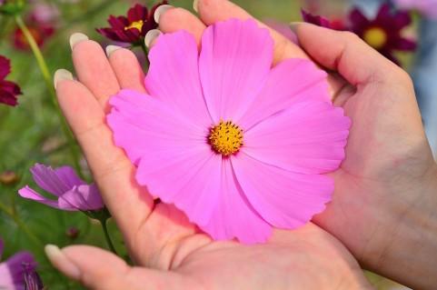 両手に持つ花