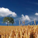 収穫と学びとすっきり感
