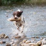 駆け抜ける犬、ちょと楽しげ