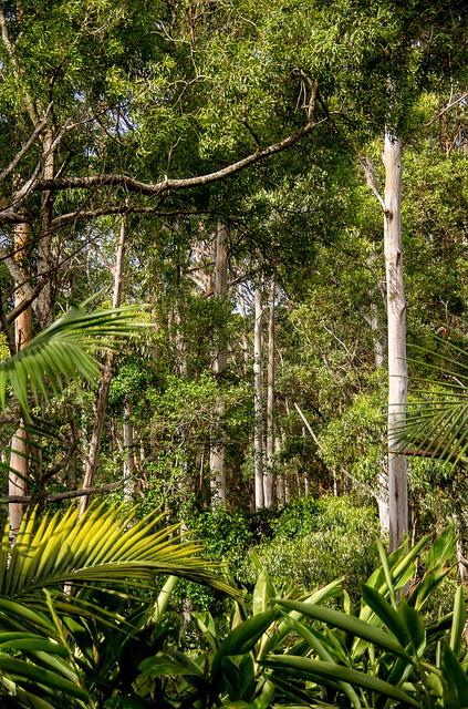 熱帯雨林の中へ