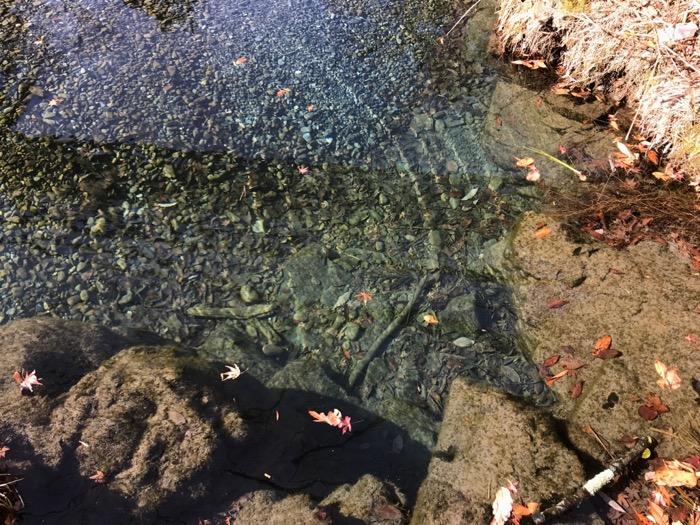 透明度が高い奥多摩の川1