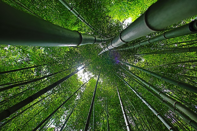 竹のようにしなやかな軸