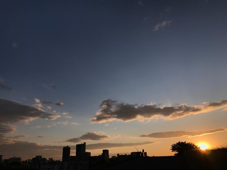 木々の向こうの夕日と影